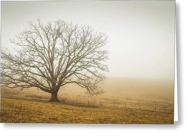 Tree In Fog - Blue Ridge Parkway Greeting Card