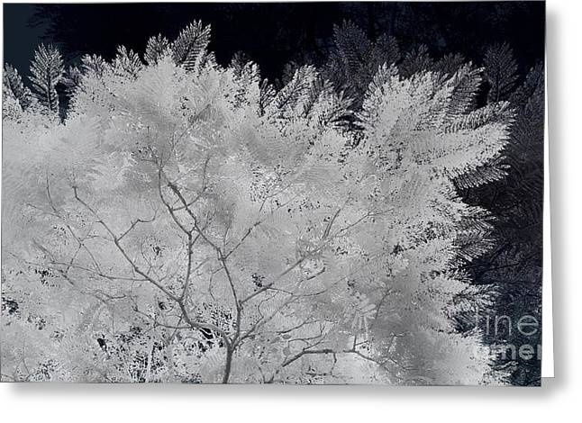 Ghost Of A Tree Greeting Card
