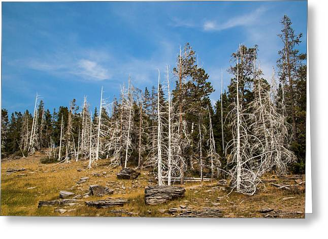 Greeting Card featuring the photograph Ghost Trees At Yellowstone by Lon Dittrick