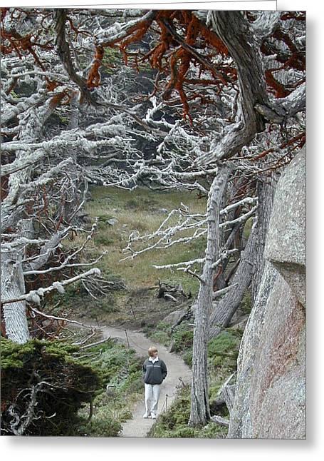 Ghost Trees Greeting Card by Douglas Barnett