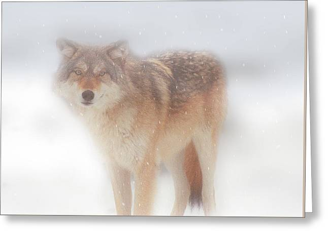 Ghost Wolf Greeting Card by Greg Slocum