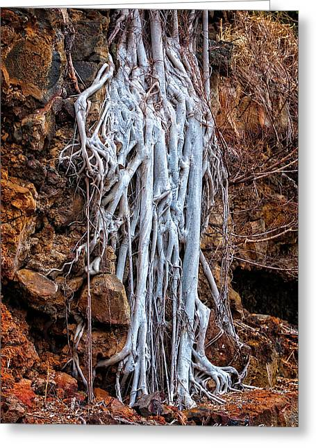 Ghostly Roots Greeting Card by Christopher Holmes