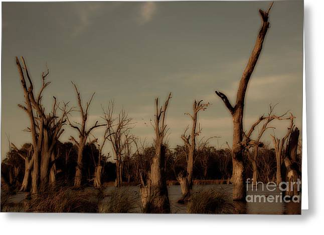 Greeting Card featuring the photograph Ghostly Trees by Douglas Barnard