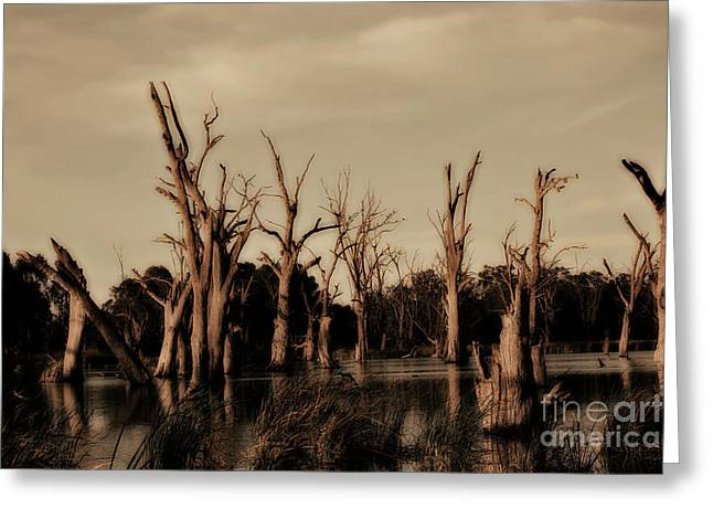 Greeting Card featuring the photograph Ghostly Trees V2 by Douglas Barnard