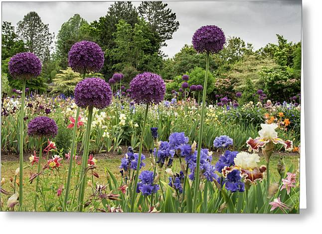 Giant Allium Guards Greeting Card