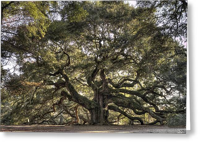 Charleston Greeting Cards - Giant Angel Oak Tree Charleston SC Greeting Card by Dustin K Ryan