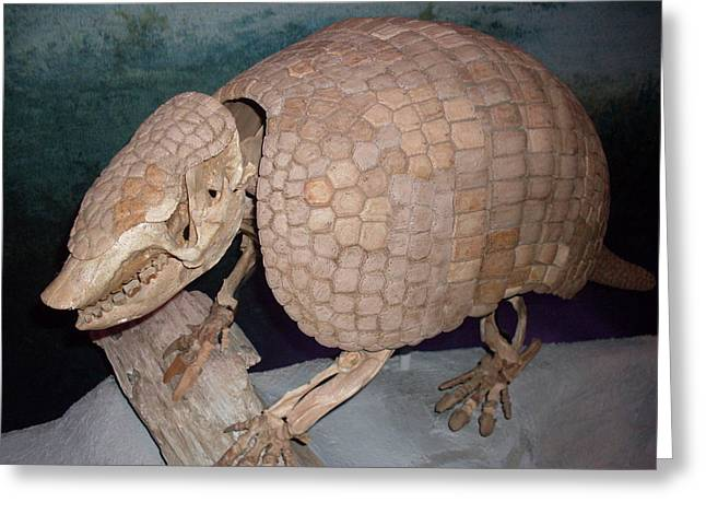 Giant Armadillo 2 Greeting Card by Warren Thompson