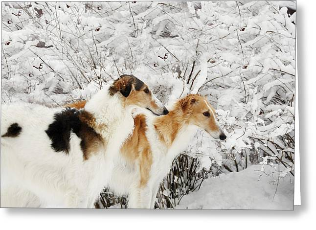 giant Borzoi hounds in winter Greeting Card by Christian Lagereek