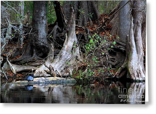 Giant Cypress Knees Greeting Card
