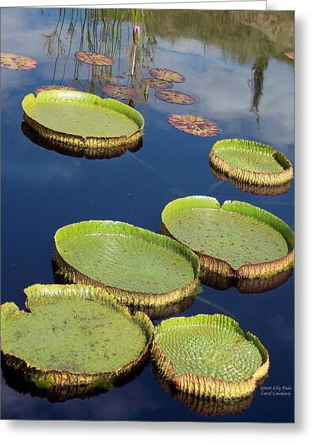 Lily Pad Greeting Cards Greeting Cards - Giant Lily Pads Greeting Card by Carol Cavalaris