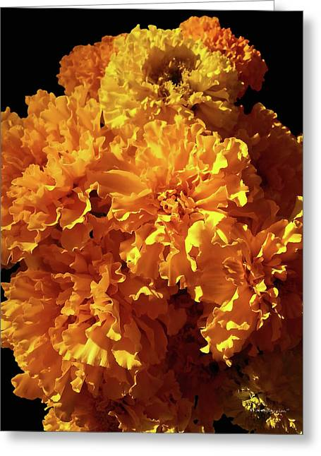 Giant Marigolds Greeting Card