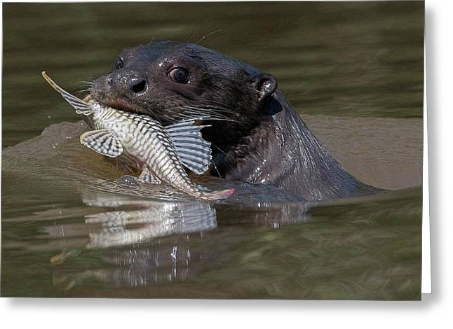 Greeting Card featuring the photograph Giant Otter #1 by Wade Aiken