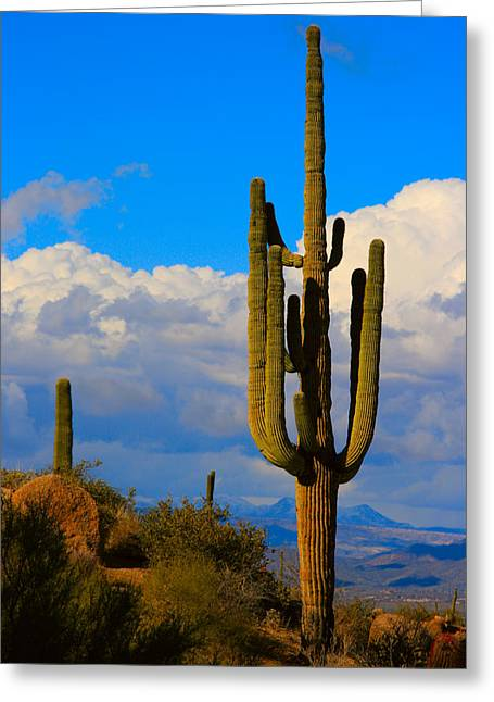 Giant Saguaro In The Southwest Desert  Greeting Card by James BO  Insogna