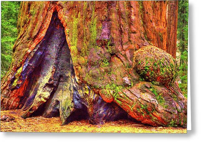 Giant Sequoia Base With Fire Scar Greeting Card