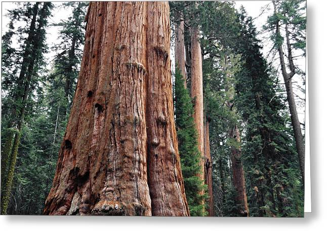 Greeting Card featuring the photograph Giant Sequoia II by Kyle Hanson