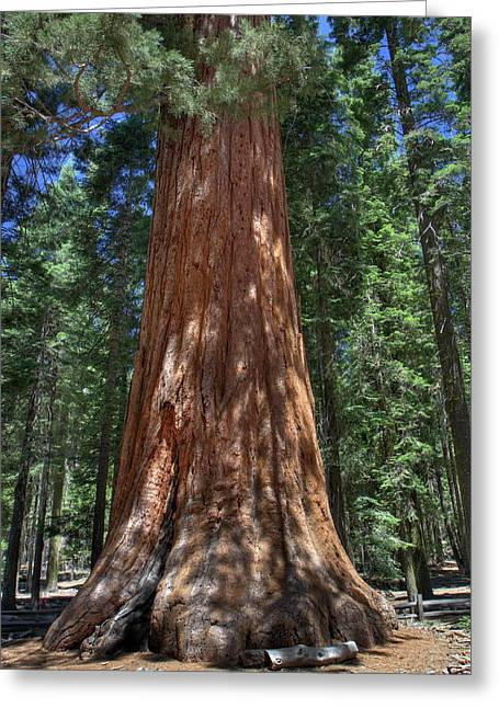 Giant Sequoia Greeting Cards - Giant Sequoia in Yosemite National Park Greeting Card by Pierre Leclerc Photography