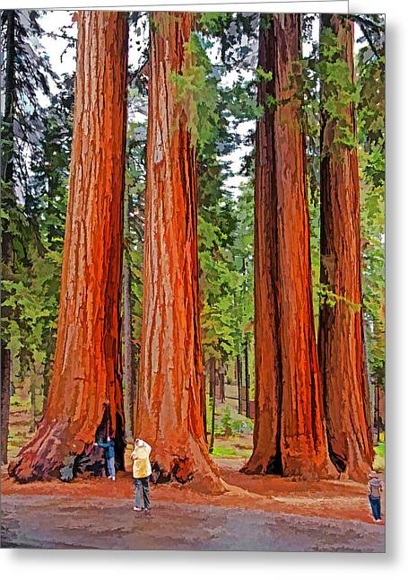 Giant Sequoias Greeting Card by Dennis Cox