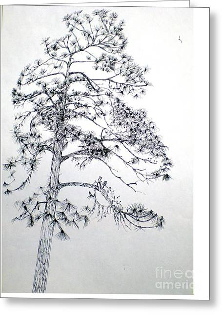 Giant Silver Pine Tree Greeting Card by Hal Newhouser