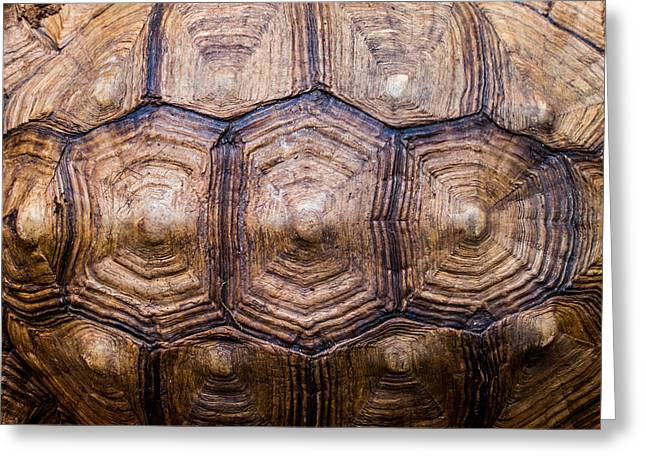 Tortoise Greeting Cards - Giant Tortoise Carapace Greeting Card by Hakon Soreide