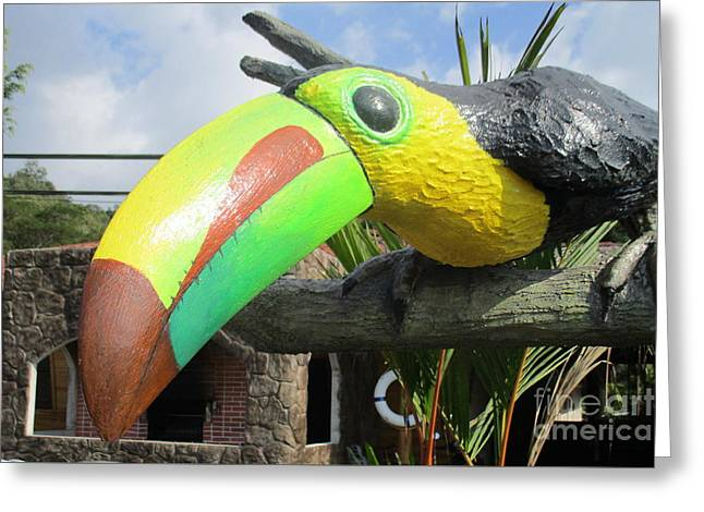 Giant Toucan Greeting Card by Randall Weidner