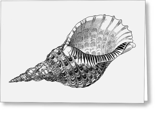 Giant Triton Shell Greeting Card