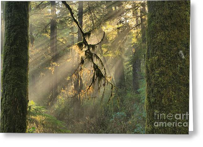 Giants And Light Beams Greeting Card by Adam Jewell