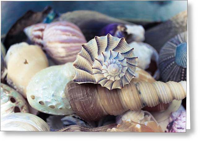 Gifts From The Sea Greeting Card by Colleen Kammerer