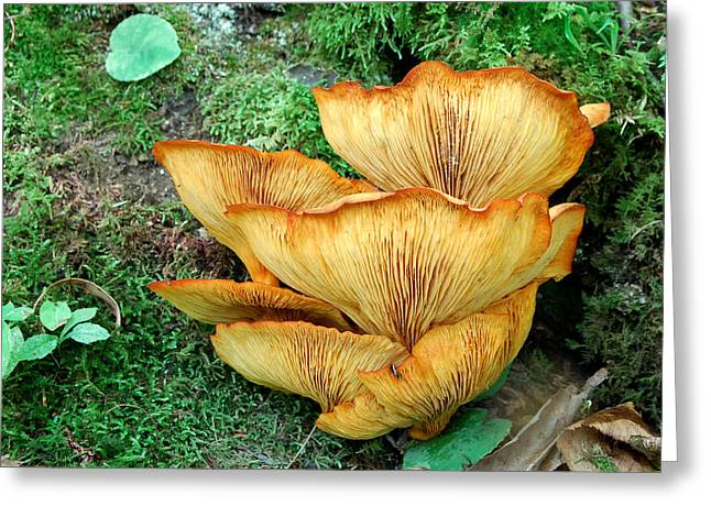 Gilled Fungus Greeting Card