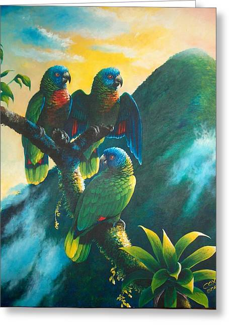 Gimie Dawn 1 - St. Lucia Parrots Greeting Card by Christopher Cox
