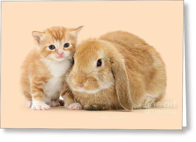 Ginger Kitten And Sandy Bunny Greeting Card