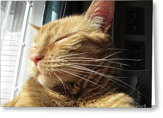 Ginger Tabby Greeting Card