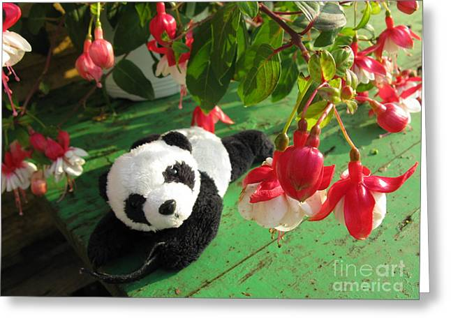 Greeting Card featuring the photograph Ginny Under The Red And White Fuchsia by Ausra Huntington nee Paulauskaite