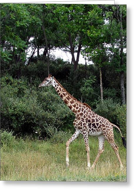 Giraffe 2 Greeting Card by George Jones