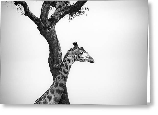 Giraffe And A Tree Greeting Card