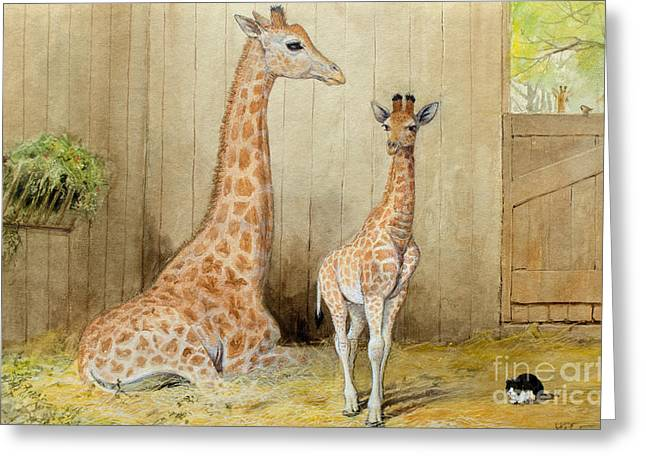 Giraffe And Young Greeting Card