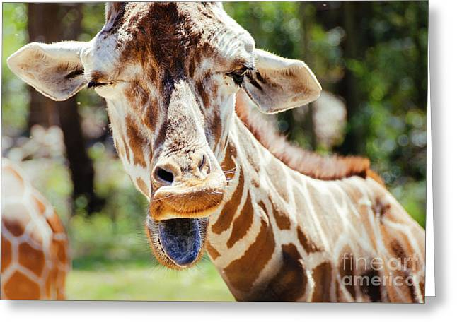 Greeting Card featuring the photograph Giraffe by Andrea Anderegg