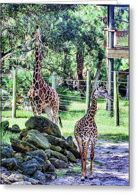 Giraffe Art I Greeting Card