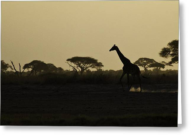 Giraffe At Sunset Greeting Card by Marion McCristall