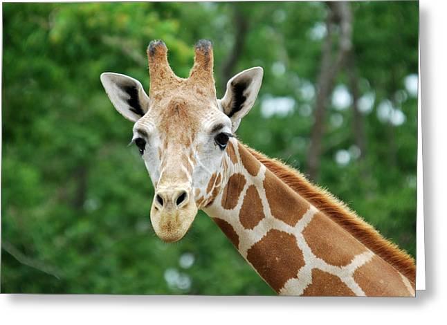 Giraffe Face Greeting Card by Teresa Blanton