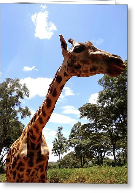 Giraffe Getting Personal 3 Greeting Card