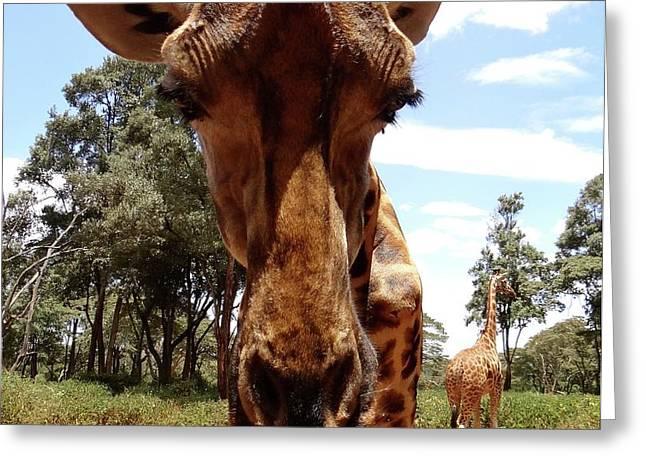 Giraffe Getting Personal 6 Greeting Card