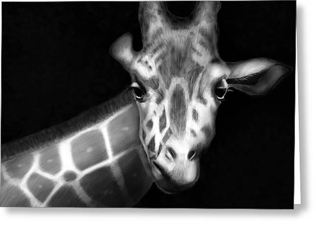 Giraffe In Black And White Greeting Card