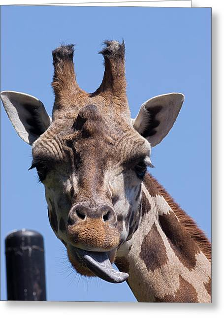 Greeting Card featuring the photograph Giraffe by JT Lewis