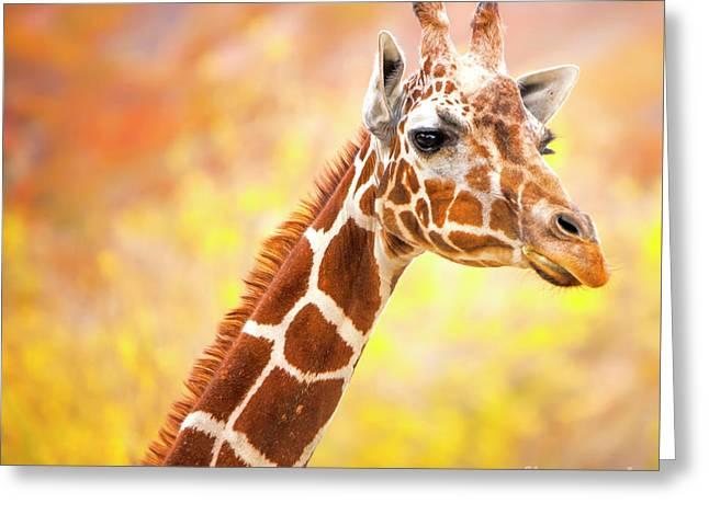 Giraffe, Animal Decor, Nursery Decor,  Greeting Card