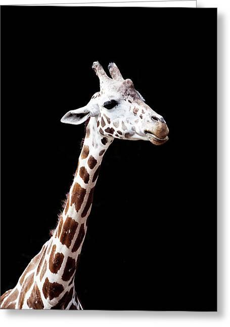 Giraffe Greeting Card by Lauren Mancke