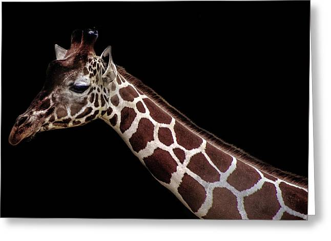 Giraffe Greeting Card by Martin Newman