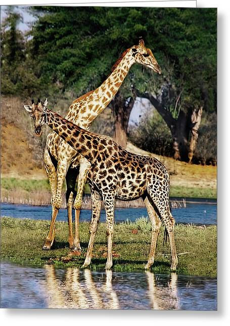 Giraffe Mother And Calf Greeting Card