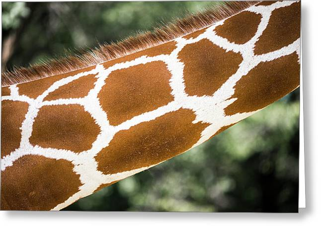 Giraffe Neck Greeting Card