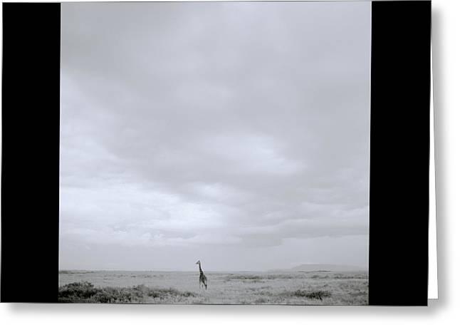 Giraffe Under Big Sky Greeting Card by Shaun Higson