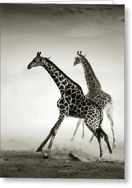 Giraffes Fleeing Greeting Card
